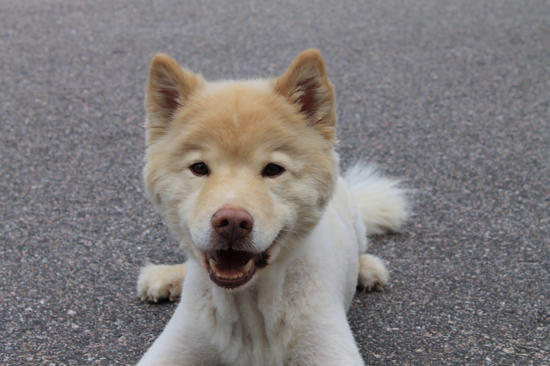 Koirakoulu Helsingissä kaikille koirille