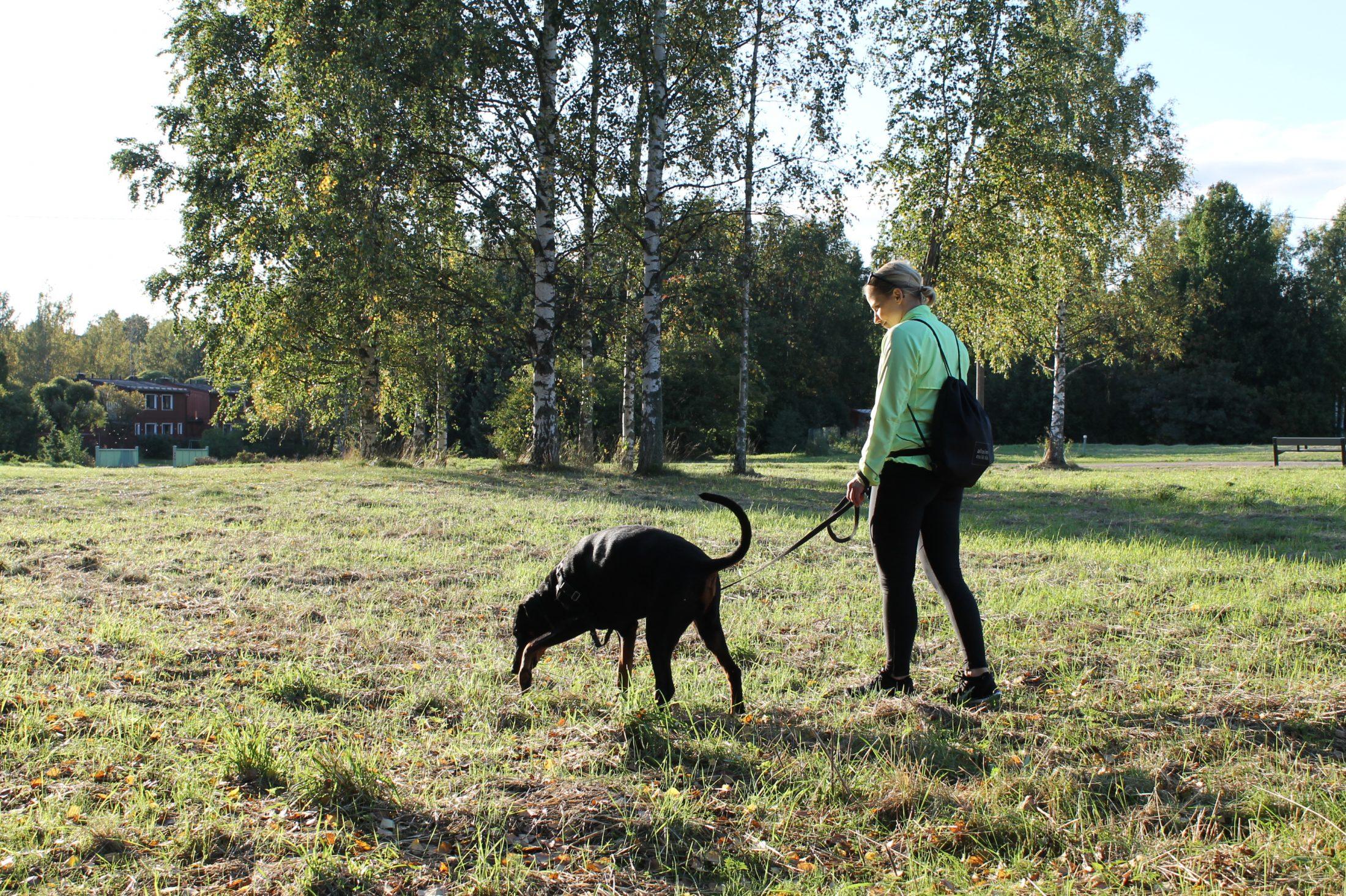 Jälkikurssi, makkarajälki ja jäljen alkeet Helsinki