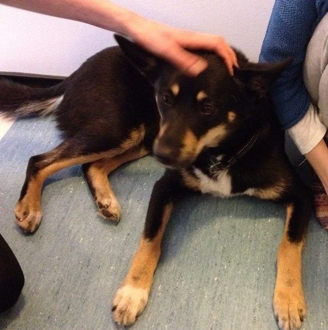 Koira tuo toivottua vaihtelua sairaalan ja vanhainkodin arkeen