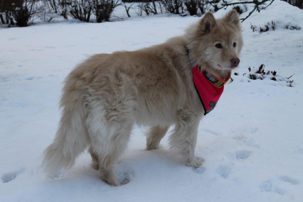 Koirakurssi Helsinki kaikille veteraanikoirille
