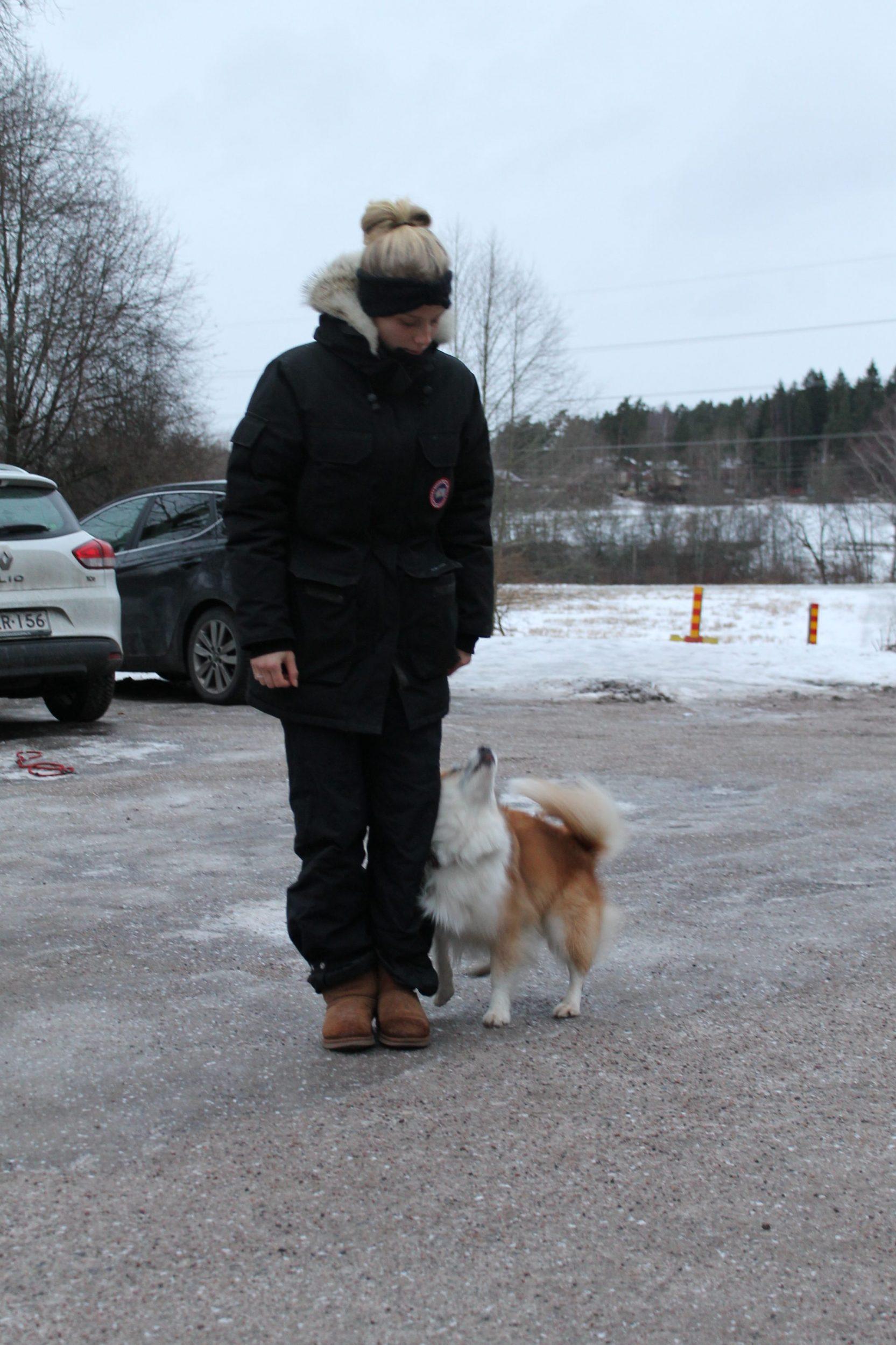 Yksityistunti koirakoulussa