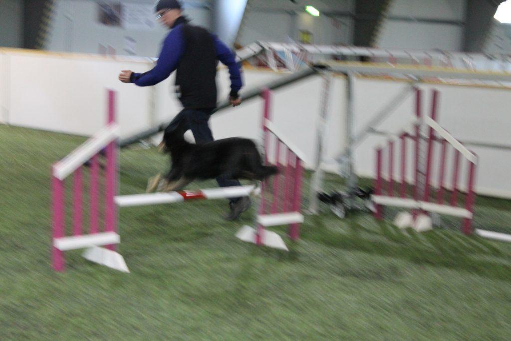 Heikki kannustaa koiranohjaajia ja antaa heille oikeanlaisia kotitehtäviä