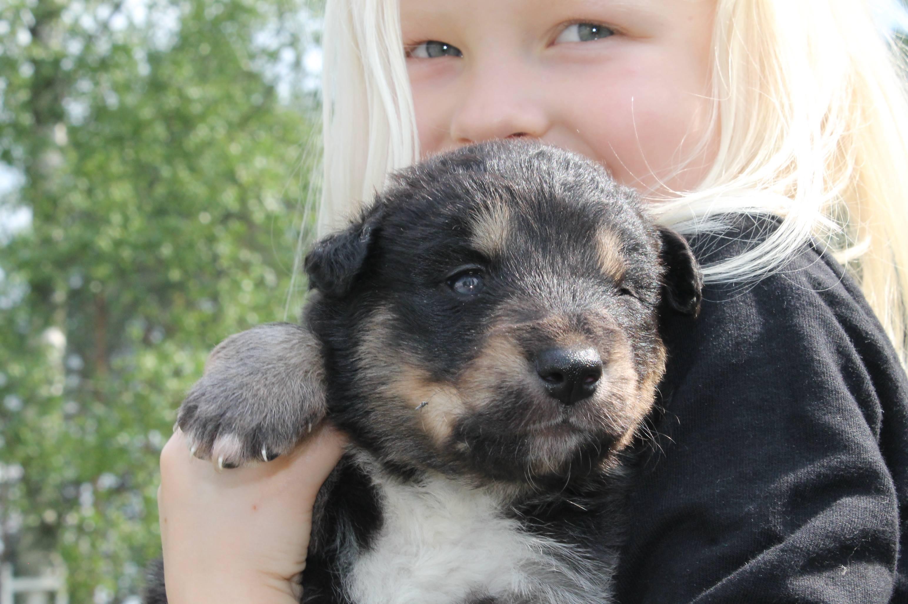 Helsinki koirakurssilla alle 15-vuotias lapsi oppii käsittelemään koiraa