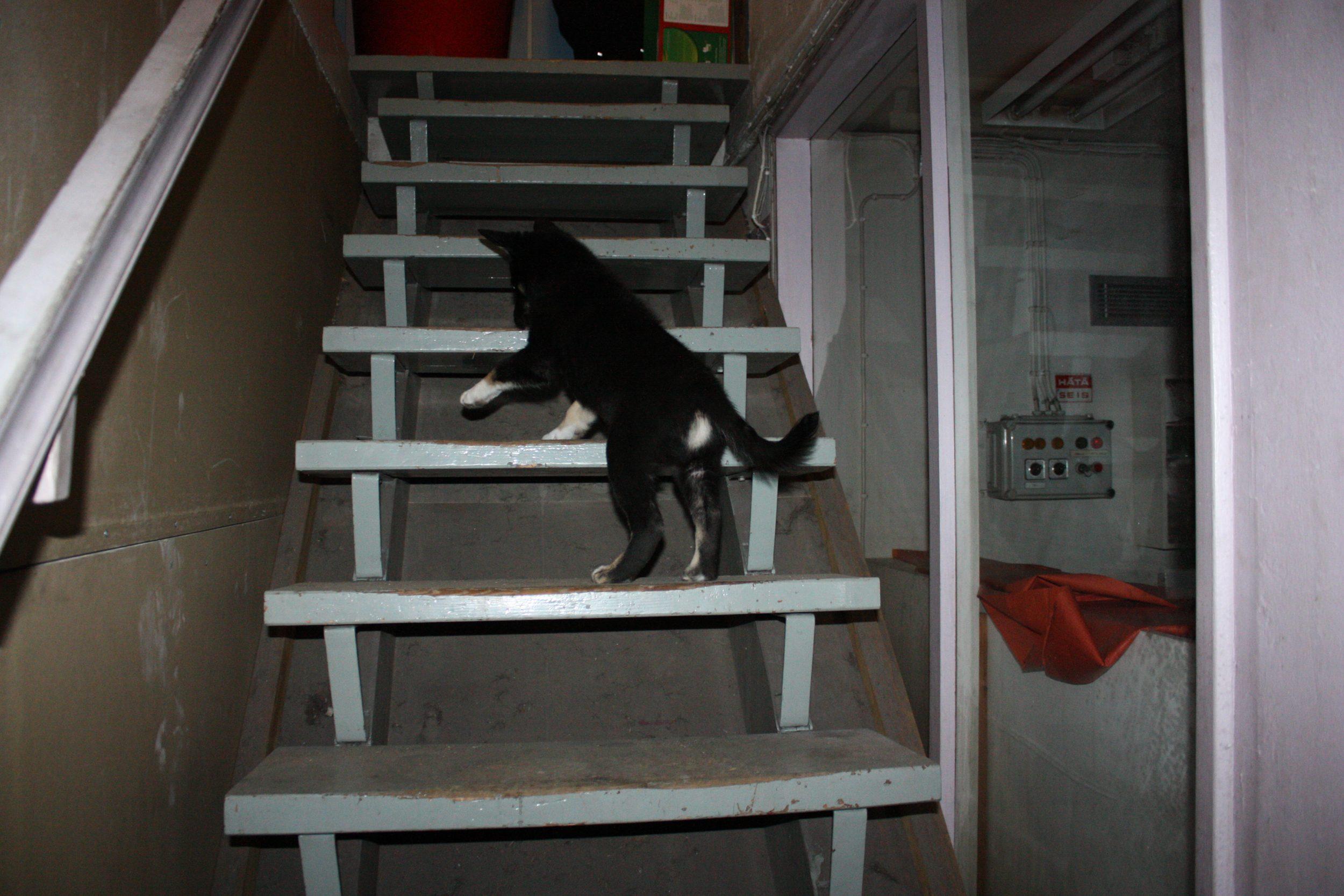 Pentukoulu etenee askel askeleelta