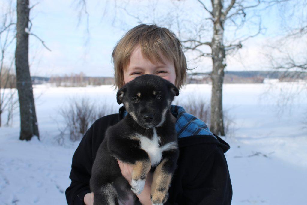 Lapsi kohtaa lapinporokoiran talvella