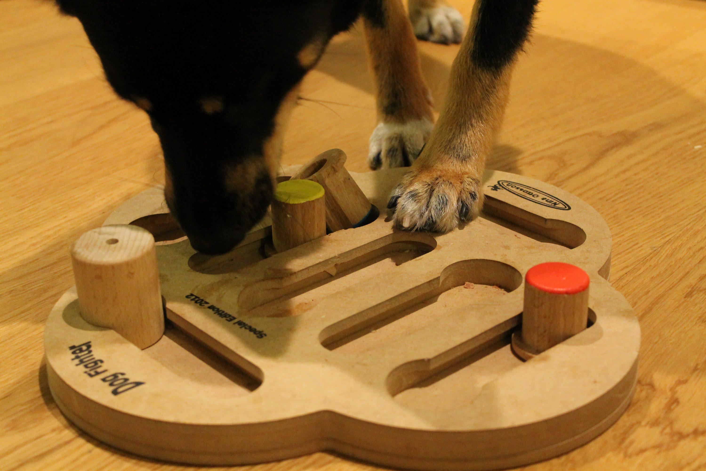Koiran pelit ovat hyvä keino aktivoida kotikoiraa
